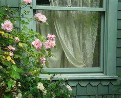 roses outside the window. lace curtains. trim. so pretty together
