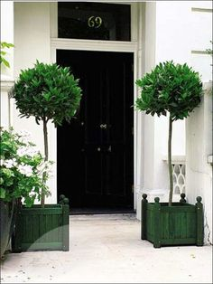 Topiary standards and wooden planter boxes/ Idea is to paint planter boxes black and put house number on one box. Exterior Design, Interior And Exterior, Laurus Nobilis, Wooden Planter Boxes, Topiary Trees, Potted Trees, Porch Topiary, Enchanted Home, Black Doors