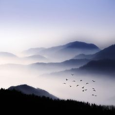 Flying Over The Fog by Philippe Sainte-Laudy on 500px