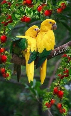World Birds, All Birds, Animals Of The World, Pretty Birds, Beautiful Birds, Animals Beautiful, Nature Animals, Animals And Pets, Cute Animals