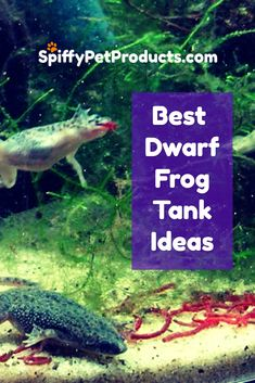 Best Dwarf Frog Tank Ideas You've Ever Seen! Aquarium Kit, Aquarium Ideas, Dwarf Frogs, Frog Habitat, Frog Tank, Pet Frogs, Small Fish Tanks, Fish Care, Pet Fish
