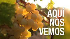 Enoturismo en la Costa Blanca. Bebidas espirituosas y vinos de Alicante