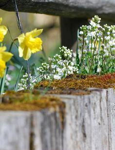 Hochbeet bepflanzen - Die 6 frischsten Tipps  #flower, #diy, #garden, #summer, #happy, #warm