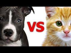 Divertidas comparaciones entre perros y gatos