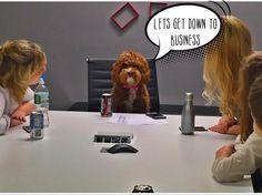 Boss bitches look you right in the  #labradoodlesofinstagram #labradoodle #houndsbazaar #petstagram #buzzfeed #buzzfeedanimals #labradoodlepuppy #labradoodle #fabdog #dogsofig #dogsofnyc #dogsofnewyork #dogstagram #lacyandpaws #weeklyfluff #barkbox #barkpost #bestwoof #fluffypack #puppies by minniedoodle