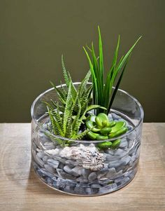 The succulent plants are wonderful choices for miniature garden design, making beautiful eco gifts and decorating rooms or outdoor living spaces Succulent Gardening, Succulent Terrarium, Container Gardening, Succulent Plants, Succulent Centerpieces, Succulent Arrangements, Centerpiece Ideas, Table Decorations, Growing Succulents