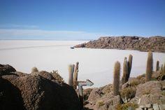 Isla del pescado - loads of spiky cactus^^