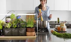 Grow your own fruit and veg indoors in even the smallest spaces with Bulbo | Inhabitat - Sustainable Design Innovation, Eco Architecture, Green Building