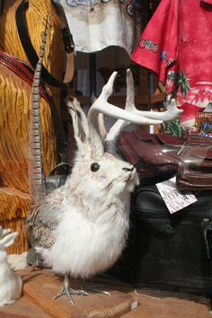 """Galena, NW Illinois: There are over 100 stores along Galena's Main Street, with antiques, art galleries and eclectic boutiques. """"Eclectic"""" is the best description of this item, which does not appear in any Natural History book I have ever read..."""