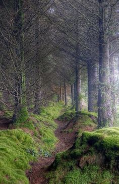 Path to King's Cave, Isle of Arran, Scotland