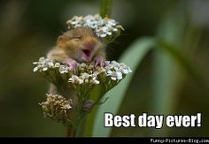 cute animal memes - Bing Images