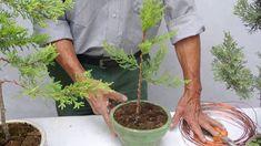 El ciprés, arbol ideal para el diseño Cactus, Water Gardens, Plants, Youtube, Gardens, Dwarf Trees, Tree Art, Cypress Trees, Landscaping
