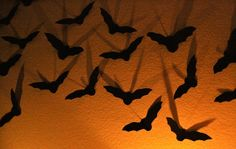 our Halloween House, using 5 tutorials and a little shopping – MADE EVERYDAY Halloween Wall Decor, Halloween Bats, Halloween Season, Halloween House, Holidays Halloween, Halloween Decorations, Halloween Ideas, Samhain Decorations, Craft Decorations