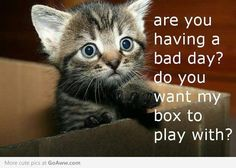 I love cute kittens and this kitten is cute. Do you want my box to play with? Cute Animal Quotes, Cat Quotes, Funny Animal Pictures, Funny Animals, Cute Animals, Cat Sayings, Animal Memes, Life Quotes, Humor Quotes