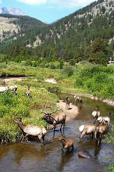Rocky Mountain Wildlife ~ this is a common scene in my life ~