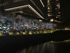 Cherry blossom Tokio