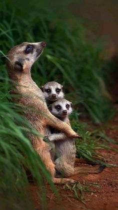 Nature Animals, Animals And Pets, Wild Animals, Beautiful Creatures, Animals Beautiful, Cute Baby Animals, Funny Animals, Animal Babies, Disney Animal Kingdom