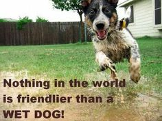 Nothing is friendlier than a WET DOG!
