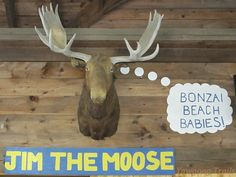 Jim the Moose at Camp Sandy Beach in #Yawgoog!  A 2014 image by David R. Brierley.