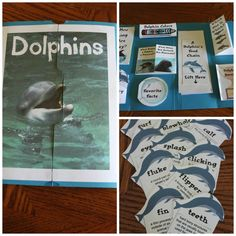 Good to use when we get to water animals! Dolphin Lapbook Kailey-Deana loved dolphins www.adealwithGodbook.com