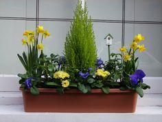 yellow and colbalt blue window box Window Box Flowers, Window Boxes, Flower Boxes, Planting Plan, Garden Windows, Spring Bulbs, Beautiful Flowers Garden, Backyard Farming, Garden Landscape Design