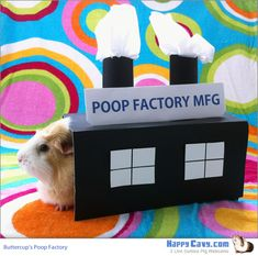 Buttercup's Guinea Pig Poop Factory  I saw this as a dog costume on Cheezeburger and wanted to make a floor-time box for my pigs.  It cracks me up!  They beat me to it :)