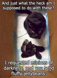 Minions of darkness...