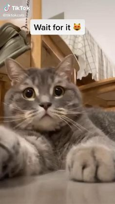 Funny Animal Jokes, Funny Cute Cats, Cute Baby Cats, Funny Cat Memes, Cute Little Animals, Funny Animal Videos, Funny Animal Pictures, Cute Funny Animals, Kittens Cutest