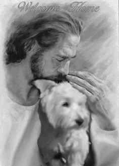 Jesus welcomes a Terrier home! Terriers, Fox Terrier, Cairn Terrier, Terrier Mix, I Love Dogs, Puppy Love, Cute Dogs, West Highland Terrier, Westies