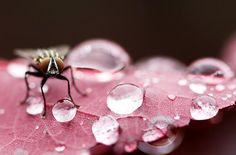 43 Of The Extremely Creative Wonders Of Macro Photography