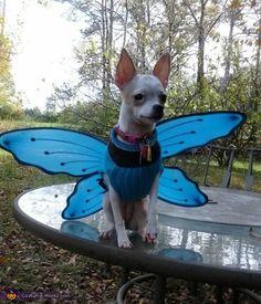 Fly Away - 2012 Halloween Costume Contest so cute she looks like Princess