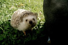 i really want to own one of those beautiful hedgehogs