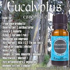 Herbs, Health and Happiness Essential Oil Of The Day - Eucalyptus:  http://www.herbs-info.com/essential-oils/eucalyptus-essential-oil.html  Click the link to learn all about the many uses and benefits of eucalyptus!