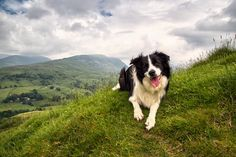 11 Bright Facts About Border Collies