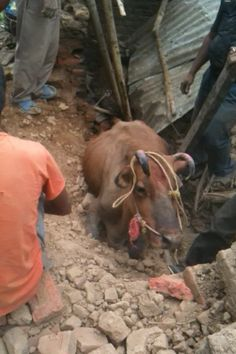 Society for Animal Welfare and Management(SAWM)-NEPAL
