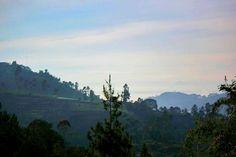 nature is the art of GOD.  #natural #nature #naturephotography #landscape #landscaping #art #atmosphere #ambience #forest #highland #landscapephotography #jayagiri #lembang #photo #photographysouls #photographer #photoshoot #photooftheday #motretalam #motretpemandangan  @lembangtiris  @explorelembang_  @wisata.lembang  @canon_eos_60d