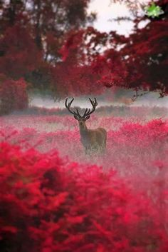 Foto Photo Animaliere, Photo D Art, Nature Animals, Animals And Pets, Cute Animals, Wild Animals, Beautiful Creatures, Animals Beautiful, Animal Photography