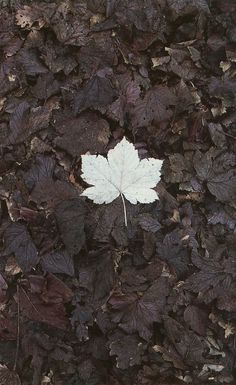We did not come to remain whole. We come to lose our leaves like the trees, the trees that are broken and start again, drawing up from the great roots. | Robert Bly