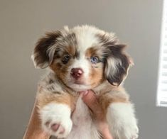27 Cutest Dog Breeds - Most Adorable Dogs When you are looking for the best pet for your family then no one can be better than a Havanese Cute Baby Dogs, Super Cute Puppies, Baby Animals Super Cute, Cute Little Puppies, Cute Dogs And Puppies, Cute Little Animals, Cute Funny Animals, Adorable Dogs, Doggies