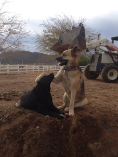 This #dog likes to pet other #dogs