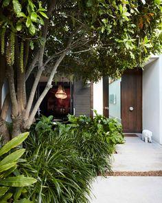 Flora making this entrance fab 💫 📸 . Home Landscaping, Tropical Landscaping, Front Garden Entrance, Landscape Design, Garden Design, Zantedeschia Aethiopica, Garden Trees, Green Garden, Back Gardens