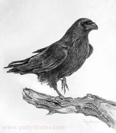 Bird Pencil Drawing, Crows Drawing, Ink Pen Drawings, Drawing Sketches, Sketching, Black Crow Tattoos, Pencil Drawing Inspiration, Vampire Drawings, Skull Sketch