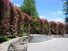 Roses - Longwood Botanical Garden - Pennsylvania by gul dixon