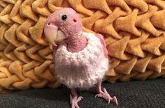 lovebird cardigan rea