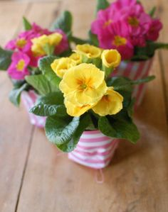 I adore this idea, would be perfect for a spring/summer wedding!  Primrose plant centerpieces from One Lovely Day.