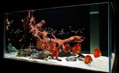 fish tank with corrals