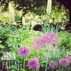 Bulbosas en un #jardin que hacen de él un precioso paisaje. www.espaciosvivos.es