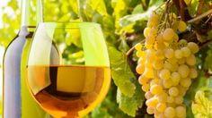 vino Italia - uva Grecco