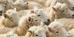 Stop Using Rabbits and Sheep for Emergency Medicine Training