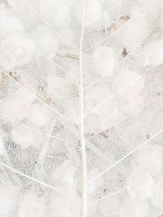 """Texture/ pattern /// """"White is not a mere absence of colour, it is a shining and affirmative thing"""" Pattern Texture, Art Texture, White Texture, Natural Texture, Pure White, White Light, Black And White, White Leaf, Photocollage"""